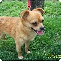 Adopt A Pet :: Squall in NC - Chesapeake, VA