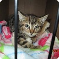 Adopt A Pet :: Jo Jo - Island Park, NY