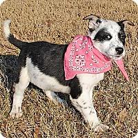 Adopt A Pet :: Naomi - Gonzales, TX