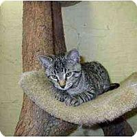 Adopt A Pet :: Pentagon - Lombard, IL