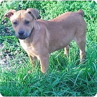 Adopt A Pet :: Percival - nashville, TN