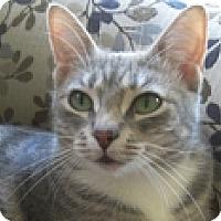 Adopt A Pet :: Emerald - Vancouver, BC