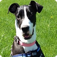 Adopt A Pet :: Lucy - Springfield, IL