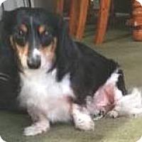 Adopt A Pet :: Twix - Orlando, FL