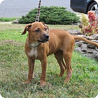 Adopt A Pet :: Duke - Middlesex, NJ