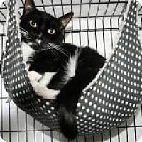 Adopt A Pet :: Jazz Hands/Jail Bird - Medford, NJ