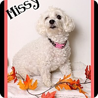 Adopt A Pet :: Missy - Covington, LA