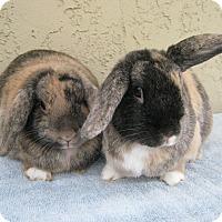 Adopt A Pet :: Cindy & Lindy - Bonita, CA
