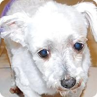 Adopt A Pet :: Lily - MINNEAPOLIS, KS