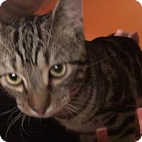 Adopt A Pet :: Clyde - Washington, DC