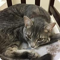 Adopt A Pet :: Shannon - Medina, OH