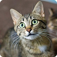 Adopt A Pet :: Nadia - Troy, MI