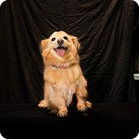 Adopt A Pet :: Stanley - Inglewood, CA