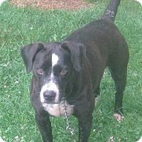 Adopt A Pet :: Chubby - Hillsboro, OH