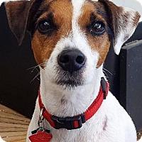 Adopt A Pet :: Ace - Gettysburg, PA