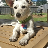 Adopt A Pet :: Coconut - Houston, TX