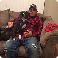 Adopt A Pet :: Patsy - joliet, IL