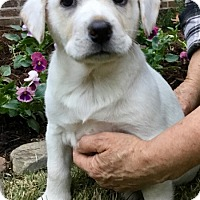 Adopt A Pet :: Zeus - Haggerstown, MD