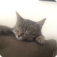 Adopt A Pet :: Kona (COURTSEY POST) - Baltimore, MD