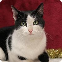Adopt A Pet :: Drifter - Midland, MI