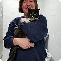 Adopt A Pet :: Simon - Elyria, OH