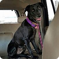 Adopt A Pet :: Bonita - Reno, NV