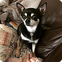 Adopt A Pet :: ANNA - richmond, VA