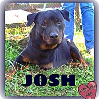 Adopt A Pet :: Josh - Middletown, NY
