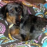 Adopt A Pet :: Roxy - Hazard, KY
