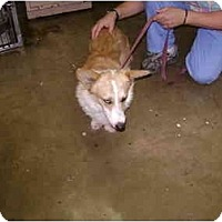 Adopt A Pet :: Frank - Inola, OK