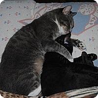 Adopt A Pet :: Marlie - Waxhaw, NC