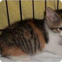 Adopt A Pet :: Snooky - Acme, PA