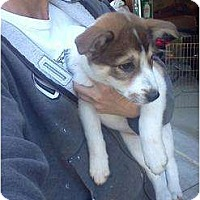 Adopt A Pet :: Gracie - CHESTERFIELD, MI