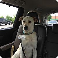 Adopt A Pet :: Tanner - Oak Brook, IL