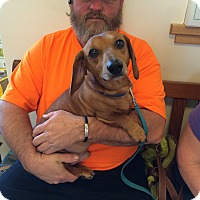 Adopt A Pet :: Huey *courtesy post - Eugene, OR