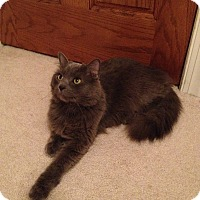Adopt A Pet :: Smokey Joe - Arlington, VA
