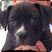 Adopt A Pet :: Percy - Johnson City, TX