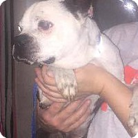 Adopt A Pet :: Walter - Weatherford, TX