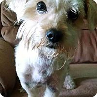 Adopt A Pet :: Zoey - Greensboro, GA