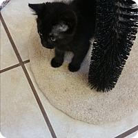 Adopt A Pet :: Verdite - Chippewa Falls, WI