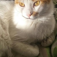 Adopt A Pet :: Sid (& Treacle) - Herndon, VA