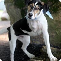Adopt A Pet :: Jacko - Dalton, GA