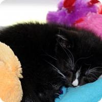 Adopt A Pet :: Alana - Cincinnati, OH