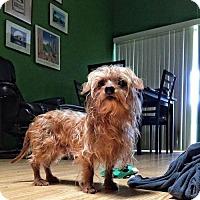 Adopt A Pet :: Dali - Weston, FL