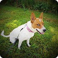 Adopt A Pet :: 16-140 - Centerton, AR