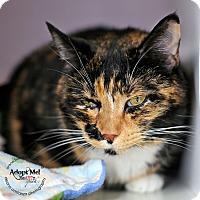 Adopt A Pet :: Francine - Lyons, NY