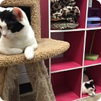 Adopt A Pet :: Maryse - Manchester, CT
