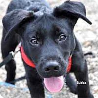 Adopt A Pet :: Bubba - Warren, PA