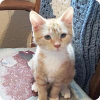 Adopt A Pet :: Madison - Lacon, IL