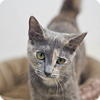 Adopt A Pet :: Jynx - Columbia, TN
